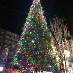 法拉盛迎佳節 節慶樹亮燈