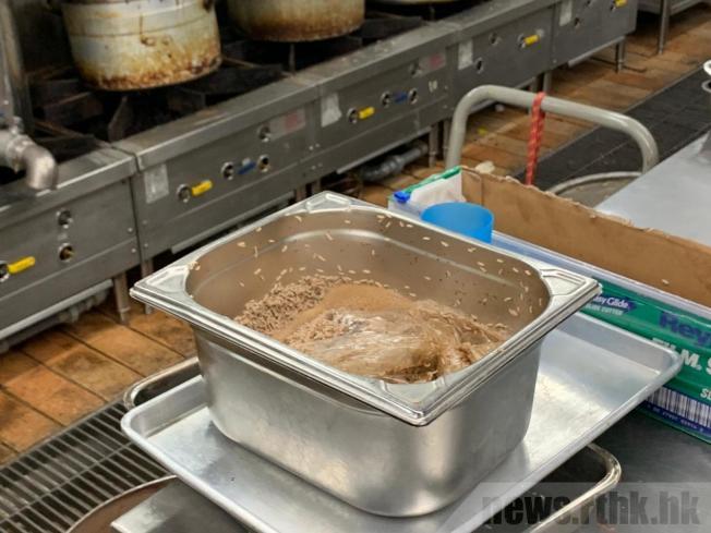 理大學生飯堂明顯見到有大量蛆蟲依附在食物上。(取材自香港電台)