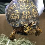 走私300隻稀有海龜  上海男子認罪