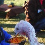 感恩節吃火雞大餐  這裡是火雞吃大餐 🍗