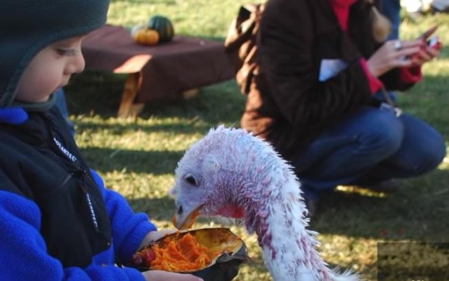 小男孩正在餵火雞。圖/截取自影片