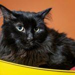 貓咪千里流浪記 失蹤5年跨州找到