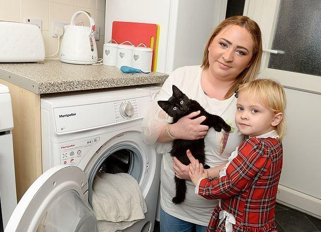 飼主CPR搶救受困洗衣機的愛貓。圖擷自dailymail