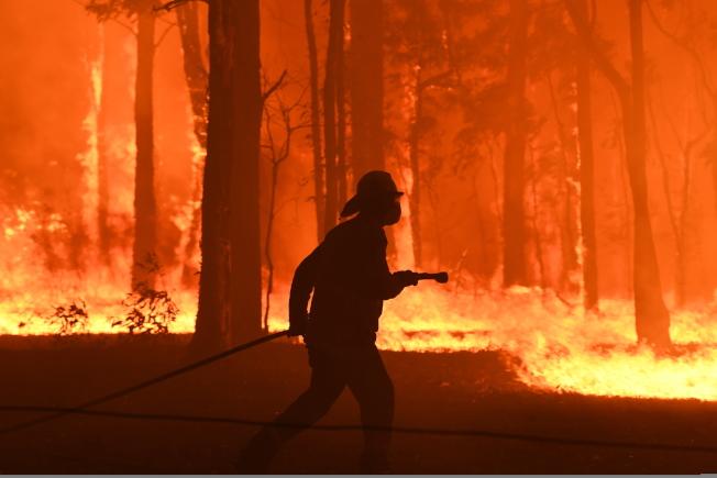 隨著氣候變遷,澳洲近來野火肆虐,許多動物被火燒嗆傷甚至死亡,棲地遭焚毀。(歐新社)