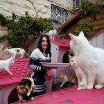 封面故事 | 寵物協會:給貓去爪屬非法