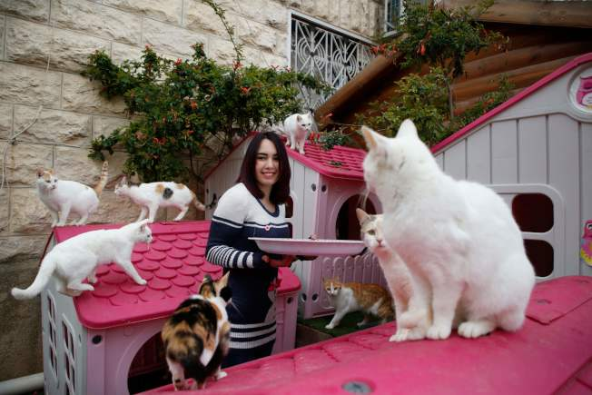 Lucy說,有的一家養了好幾多狗或者許多貓。(Getty Images)