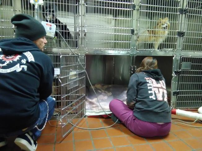 「簡單和嚴重忽視」動物是聯邦調查局收集的資料之一。圖為獸醫診所工作人員在照顧受傷的動物。(韓傑/攝影)