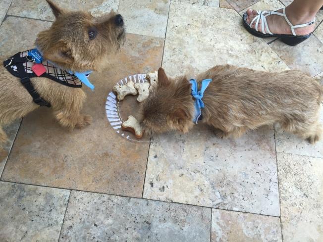狗可以吃做成骨頭的食物,但不能吃真的骨頭。(本報檔案照)