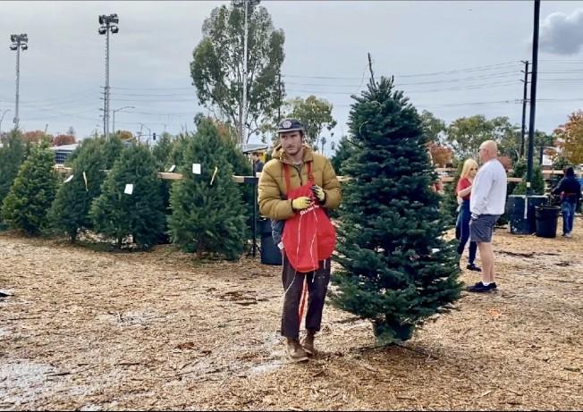 工作人員為民眾修剪聖誕樹。(記者尚穎/攝影)