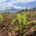 茂宜島非法噴灑農藥 孟山都認罪願罰1000萬