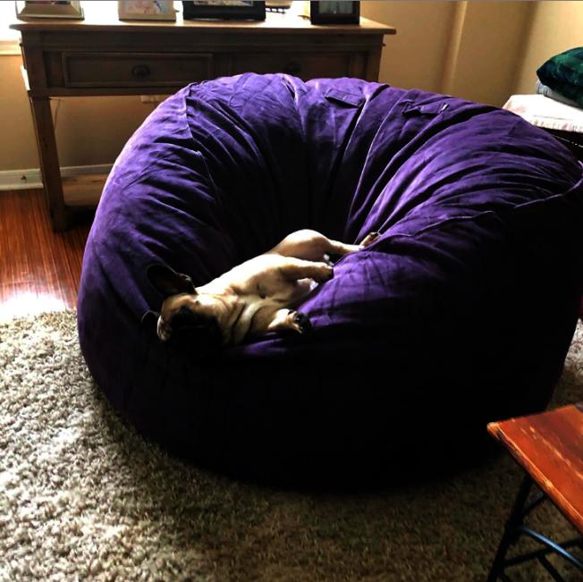 超巨大懶人沙發,寵物也會愛。圖/摘自Love Sac網站