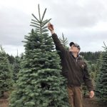 這款耶誕節重點商品漲價 竟與氣候變遷有關 因為…