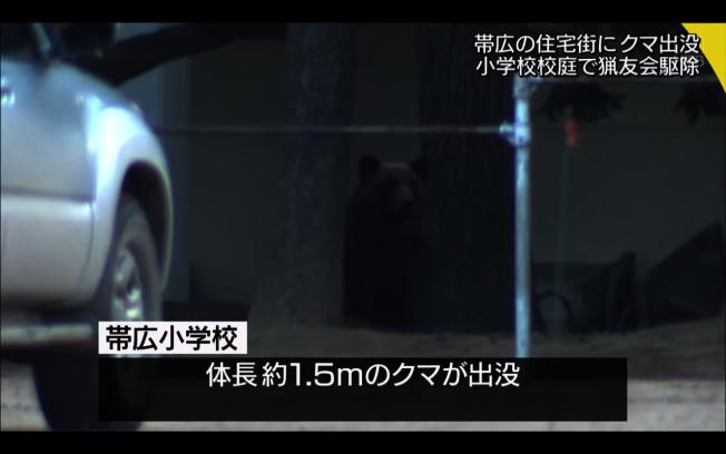 北海道一隻高1.5公尺、重130公斤的棕熊於本月1日闖入小學校園。圖取自/HTB NEWS