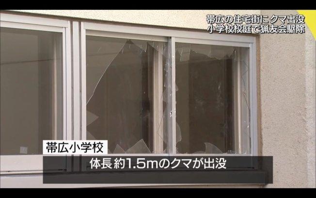 該棕熊破壞了校園內的玻璃窗。圖取自/HTB NEWS