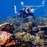 拯救珊瑚礁奇招 水下播音吸引魚群進駐