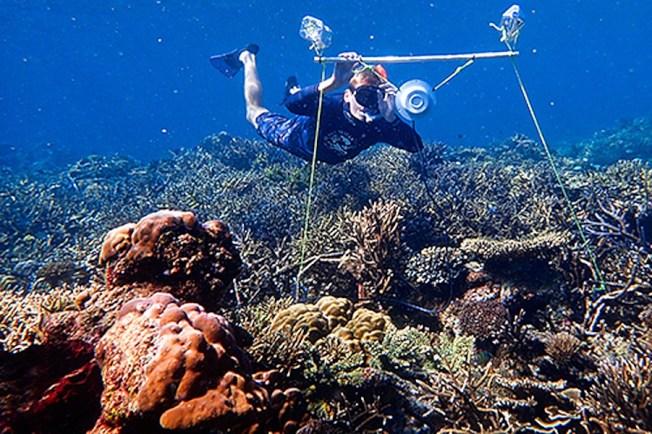 英國與澳洲研究員把水下擴音器架設在澳洲大堡礁死亡珊瑚群中,播放事先在健康珊瑚群中錄好的聲音,觀察不同魚類群落能否因此被吸引回到珊瑚群裡。(圖取自艾克斯特大學網頁exeter.ac.uk)