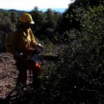 加州雖連續降雨 山火危機仍高