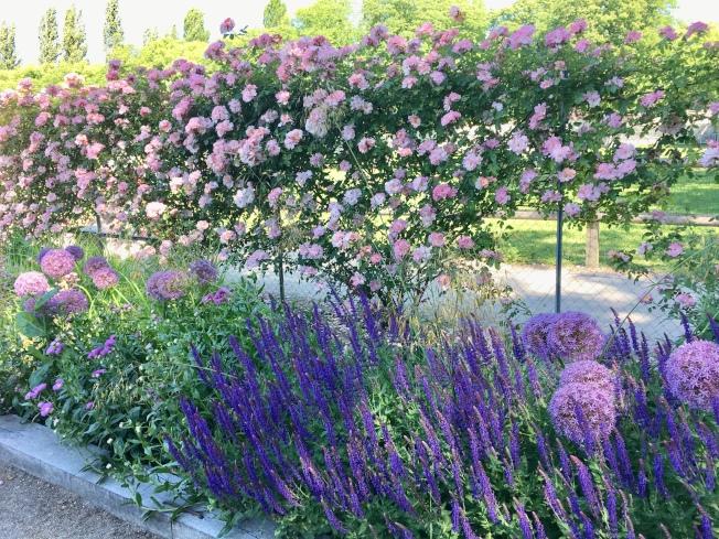 彩色繽紛的花園。