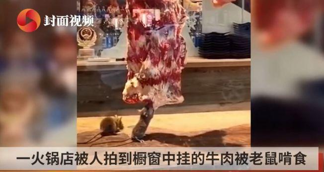 一間火鍋店被人目睹並拍下老鼠狂啃掛在餐台上的肉塊。(視頻截圖)
