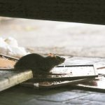 港警狂射催淚彈 連老鼠都不敢逛大街