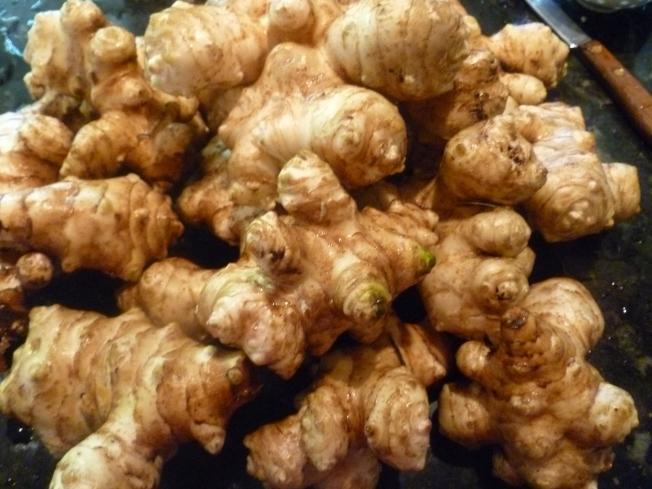 菊芋的根,像生薑,可食用。
