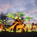 傳統彩燈結合當代藝術 黃建成打造Hello Panda Festival