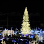 華府耶誕燈秀 點亮百呎巨樹