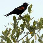 全球氣候暖化 讓鳥類體型縮小、翼展加大