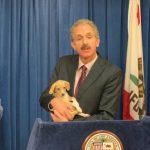 檢提警告 防假領養寵物真詐騙