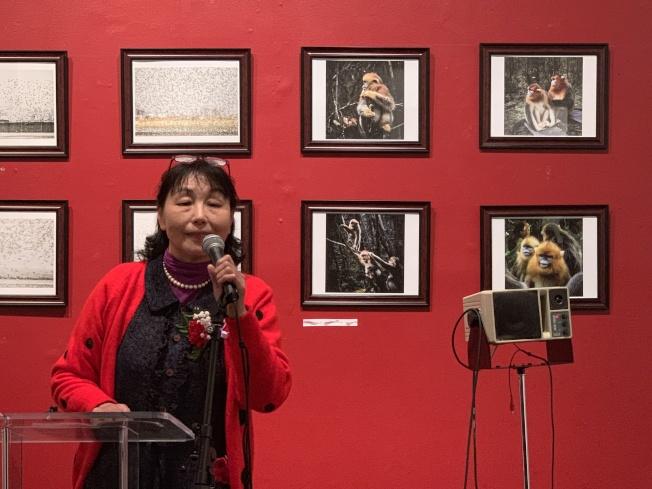 楊文紐約展四幅「藍臉金絲猴」,望用鏡頭宣導保育動物重要性(記者賴蕙榆/攝影)