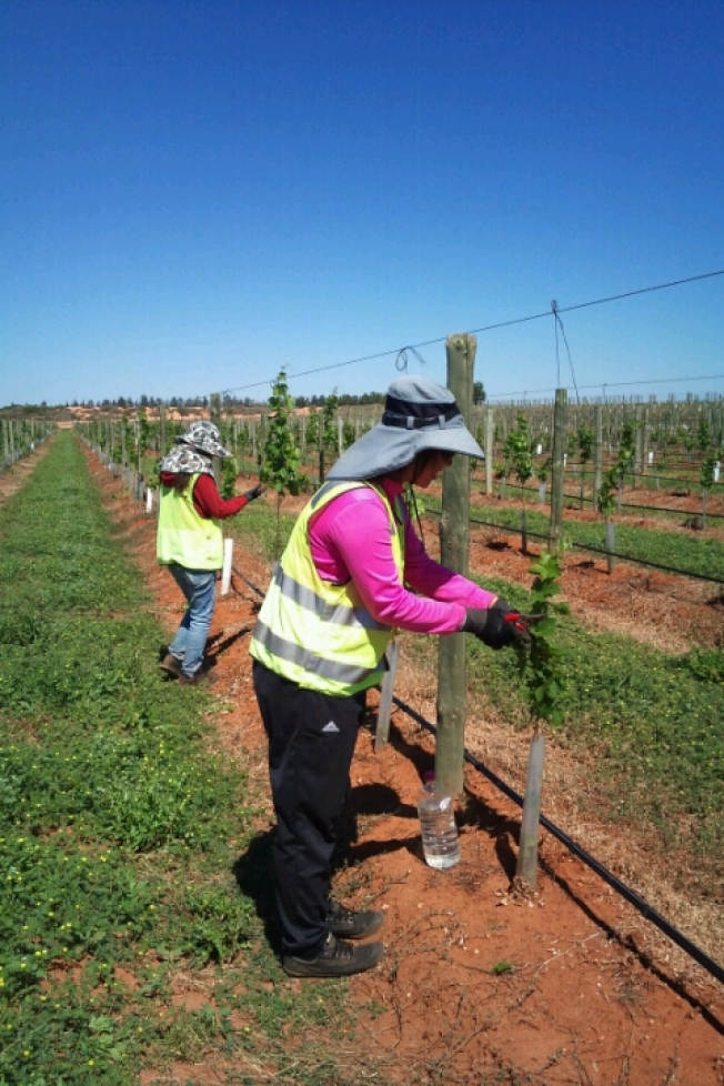 8台女澳洲打工傳淪性奴半年 UWU:雇主性剝削是常態