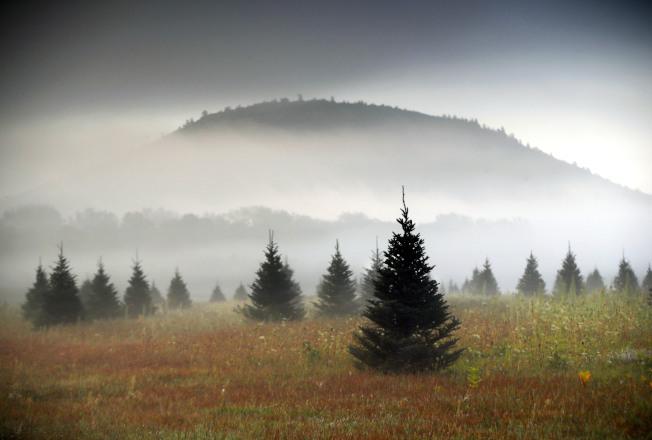 全家一起挑選一棵真的耶誕樹,然後動手布置,可以享受年節歡樂氣氛。(美聯社)