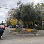 保留環島交叉路口樹木 柏克萊議會拍板