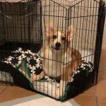 獨留牠在家超過一個月 活活餓死寵物狗 華男被捕