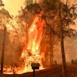 澳野火燒33萬公頃 煙霧困雪梨