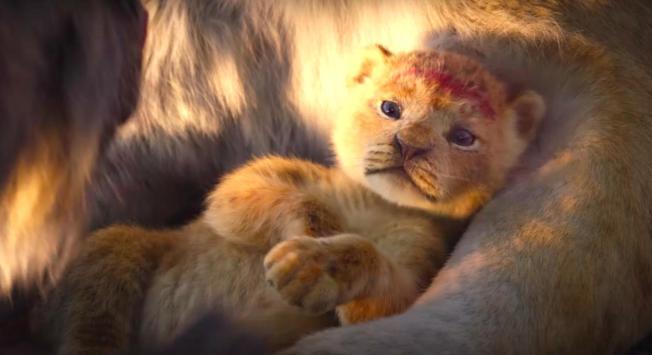 新版「獅子王」全球狂賣,卻被不少評論認為是年度劣作。(取材自IMDb)