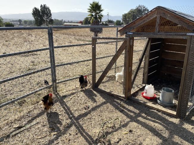 戒毒班的居住環境清幽,學員還自己養雞。(記者李榮/攝影)