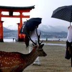觀光客多到爆 日本三大美景之一島嶼考慮收「入島稅」