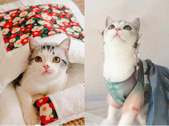 寵物被窩和寵物漢服。(取材自阿里巴巴集團旗下新媒體天下網商)
