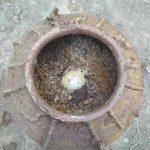 四川明代古墓 出土500年前雞蛋和稻穀