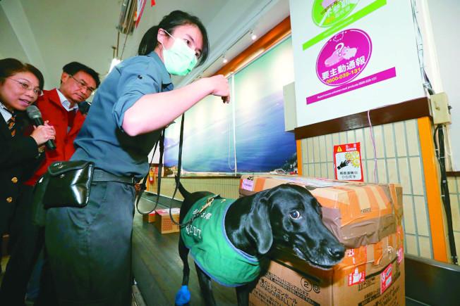 農委會主委陳吉仲(中)9日率隊到中華郵政視察春節加強防堵非洲豬瘟包裹檢疫流程。(記者曾原信/攝影)