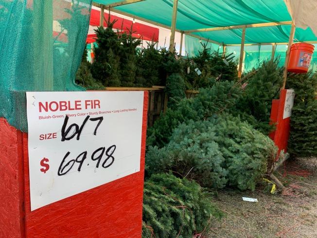 家得寶(Home Depot)耶誕樹價格低。(記者王子銘/攝影)