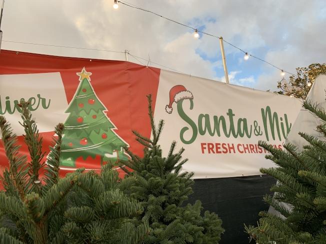 私人賣家耶誕樹更精緻。(記者王子銘/攝影)