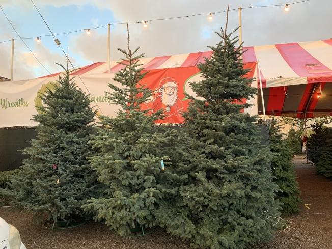 私人賣家大尺寸耶誕樹。(記者王子銘/攝影)