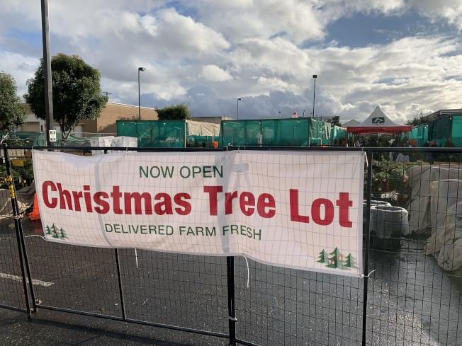 家得寶(Home Depot)耶誕樹賣場。(記者王子銘/攝影)