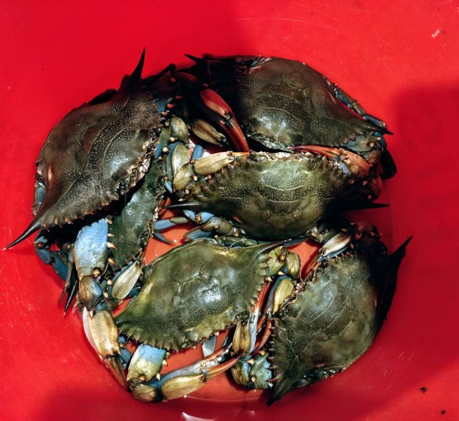 桶裡的螃蟹。圖╱水林