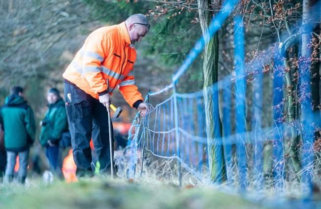 德國檢疫人員在鄰近波蘭邊界的包岑市附近設置電圍籬,防止野豬把非洲豬瘟病毒帶進德國。Getty Images