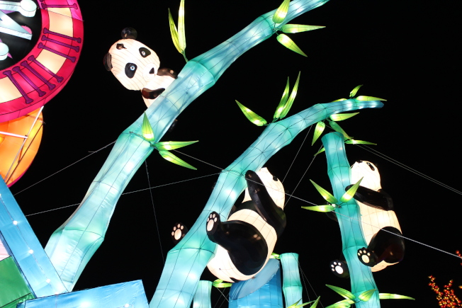 竹林間的小熊貓。(記者劉大琪/攝影)