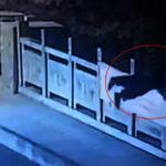兒才3歲!杭州CEO救跳河女遇難 上百人自發獻花致敬