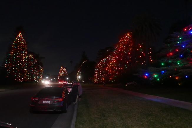 聖瑪利諾市Saint Albans路有巨大的松樹。(記者李雪/攝影)